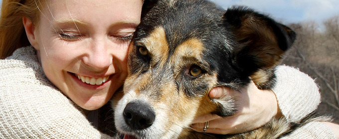 Cheshire Dogs Home Dogs For Rehoming